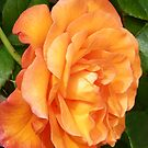 The Rose .. Orange Glory by LoneAngel