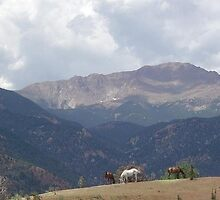 Grazing Horses near the Garden of the Gods  by gapack1965