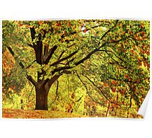 Golden Oak Tree  Poster