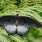 Butterfly on Fern by Usha Ganesh