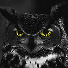 Night Owl by Bree Longberry