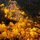 Mountain Foliage by vasu