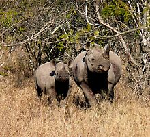 Black Rhino & baby, South Africa by Margaret  Hyde
