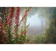 Morning Fog In My Garden (Erica) Photographic Print