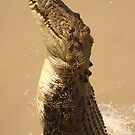 Adelaide River - Jumping Crocodile by Steve Bullock
