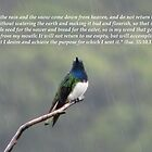 Isaiah 55:10,11 by hummingbirds