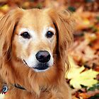 Hunter in Fall Colors #1 by Jennifer Hulbert-Hortman