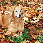 Hunter in Fall Colors #2 by Jennifer Hulbert-Hortman