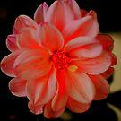 Beautiful Flower by Barbara Anderson