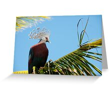 Victoria Crowned Pigeon, Papua New Guinea Greeting Card