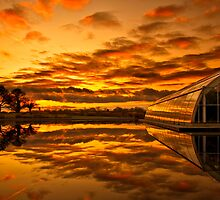 Blazing reflections by Rachael  Talibart
