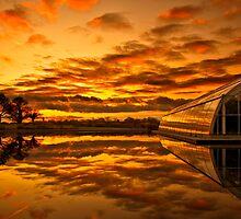 Blazing reflections by Rachael  Talibart