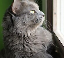 Smokey Watching Birds by Megan Noble