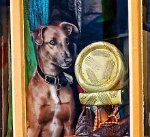 How Much Is That Doggie In the Window? by Susie Peek