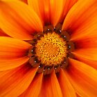 Orange fire flower by Chanzz