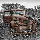 Out to Pasture by Claudia Kuhn