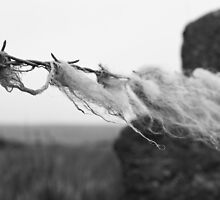 Sheep's wool... by JRHPhotography