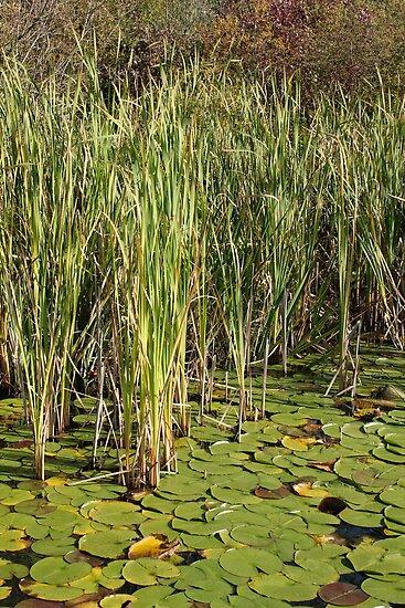 Hidden In The Reeds by J.K. Sanchez
