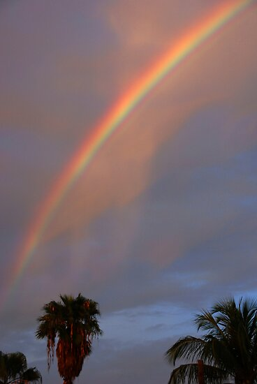 Tropical Rainbow by Susanne Van Hulst