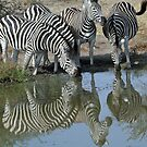 Animal water reflections by jozi1