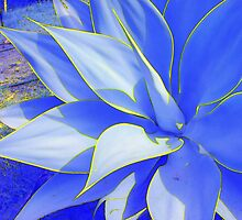 Blue Agave #1 by Diamond8