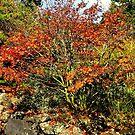 Fall Waning - Hobart Botanical Gardens by Bluemoon62
