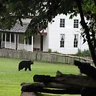 Black Bears - Gregg-Cable Mill House-GSMNP by JeffeeArt4u
