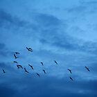 In Flight by Peter Elliott