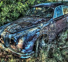 Abandoned Jaguar by Terence Russell