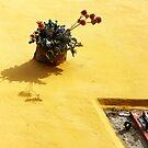 Yellow by Aleksandra Misic