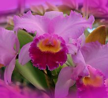 Orchids in Pink by Renee D. Miranda