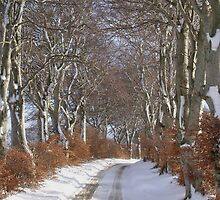 Winter Beech Avenue by R John Hughes