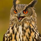 Kaln - European Eagle Owl by Val Saxby