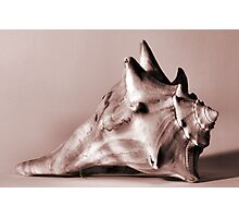 Small Conch Photographic Print