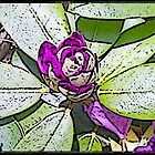 Cartoon Rhodi by Susan J. Purpura