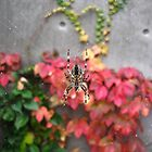 Garden Spider web - downtown Portland, Oregon by mayauribe