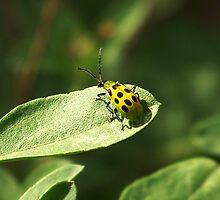 Polk-A-Dot Cucumber Beetle by Penny Odom