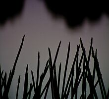 spear grass by dusk by Jo  Hall