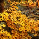 The Colors of Fall  by Saija  Lehtonen