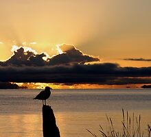 Sunrise and a seagull by Al Williscroft