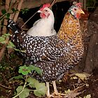 Twin Hens- Myrtle & Esme by patcheah