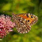 Grayling by Robert Abraham