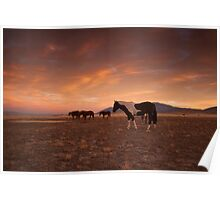 Painted Horse/Painted Sky Poster
