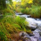 Oak Creek at dawn by Linda Sparks