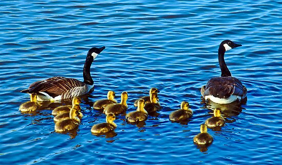 The Family Swim by Gregory J Summers
