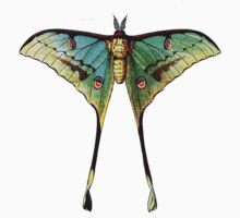Moon Moth by Zehda
