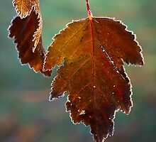 Frosty Leaves by LeeAnne Emrick