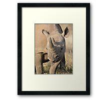 Black Rhino Close Up  Framed Print