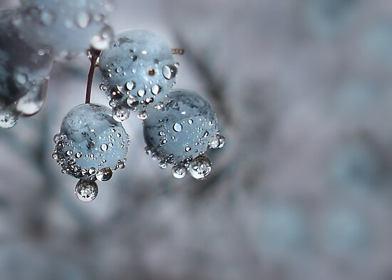 Wild Berries Decorated by Nature by Lori Deiter