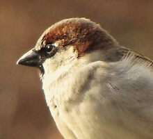 Sparrow Profile by lorilee
